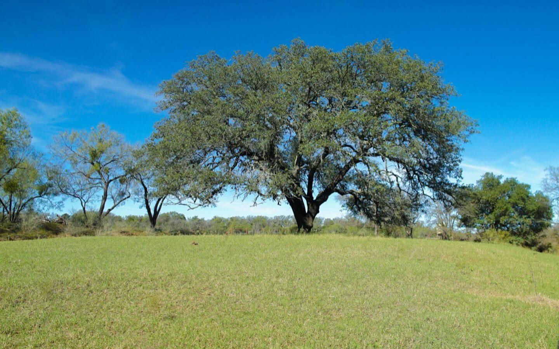 Tree at River Creek Ranch